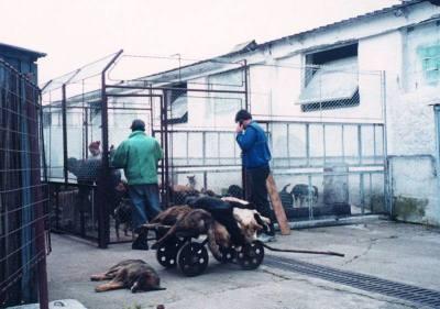 fourrière fourrières Bucarest