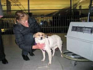 Carla - chiens adoptés en 2011