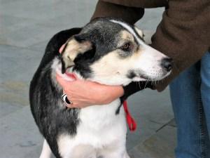 Fairy - chiens adoptés en 2011