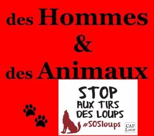 Stop aux tirs de loups soutenu par Des Hommes et des Animaux