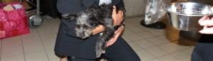 L'arrivée de July (25 septembre 2013) - chiens communautaires