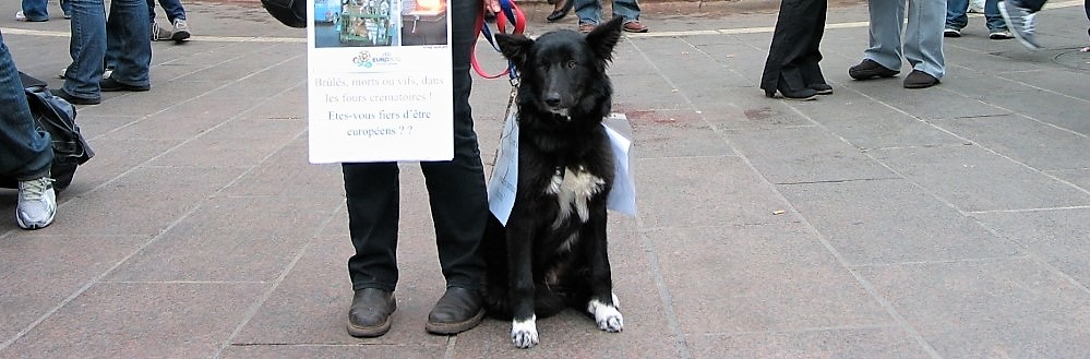 Momo contre le massacre des animaux en Ukraine - 31 mars 2012