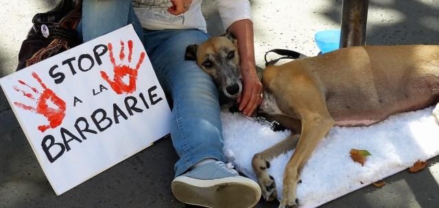 Stop à la consommation de viande de chien et de chat en Corée_août 2016