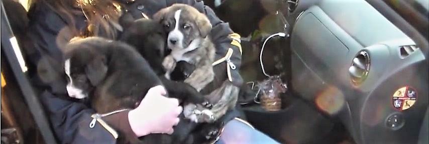 Un sauvetage de chiens dans les Carpates