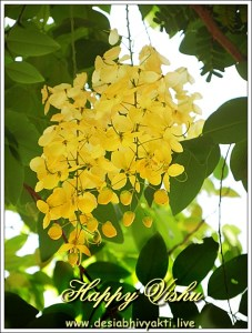 Konde or Vishu Konna flower greeting card for Vishu Festival