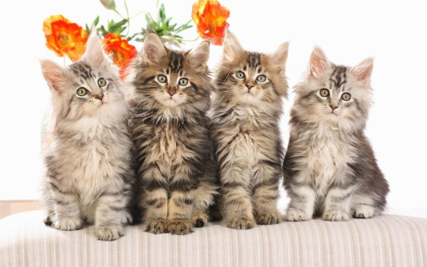 cats Pictures and Images - Page 3