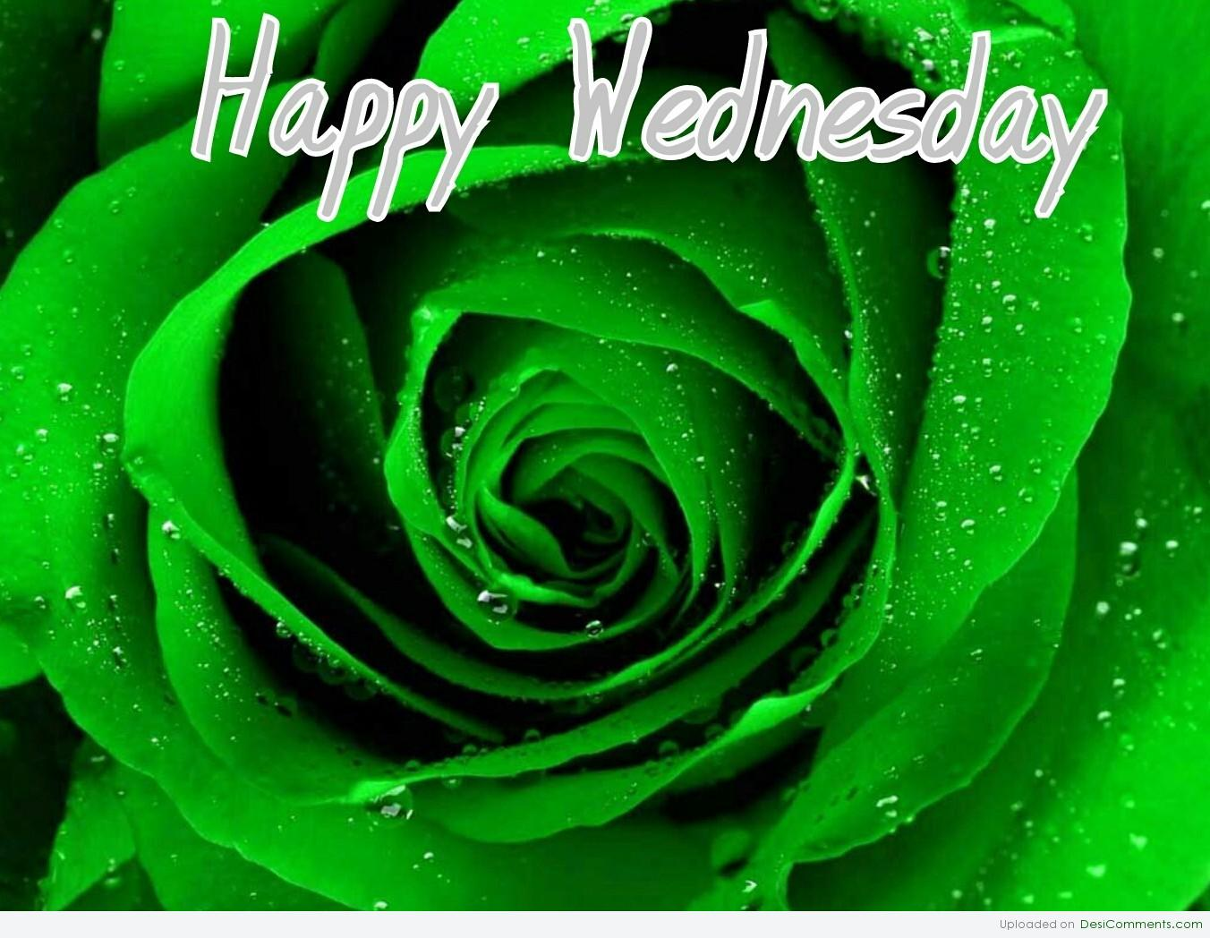 Hump Day Wednesday Quotes Funny