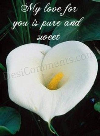 My Love For You Is Pure And Sweet