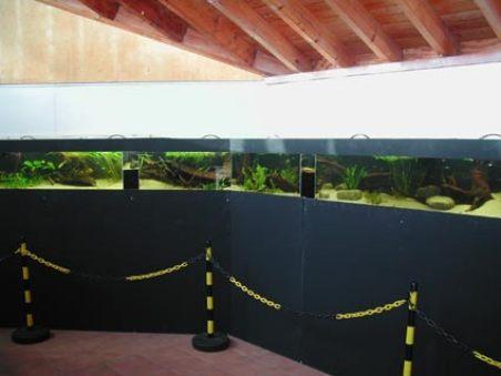 aquarium145