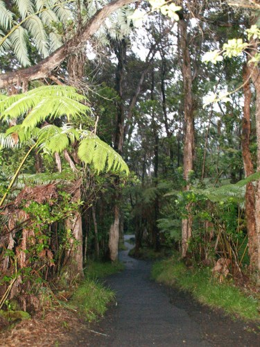 Trail to Thurston Lava Tube, Hawaii Volcanoes National Park - The Underground World of Caves