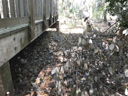 The shell ring under the boardwalk - Green's Shell Enclosure Heritage Preserve – Hilton Head Island