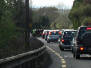 Cattle driven down the M11 in Ireland