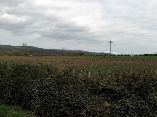 Cattle, somewhere between West Burgess and Cahir, Ireland