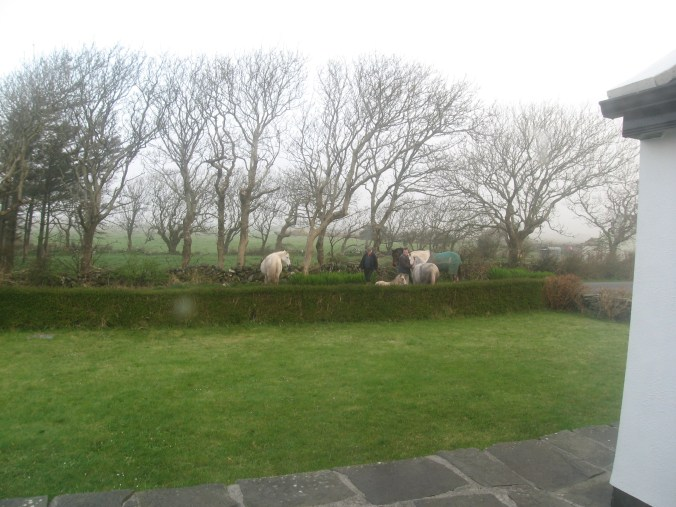 Men came to bring the new foal home at Craggy Island B&B, Ardeamush, Doolin, County Clare, Ireland