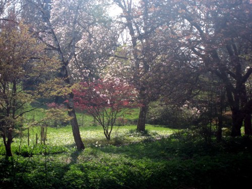 Flowering Trees and Wildflowers at Birr Castle Gardens