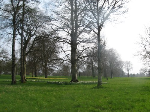 Meadows filled with daffodils