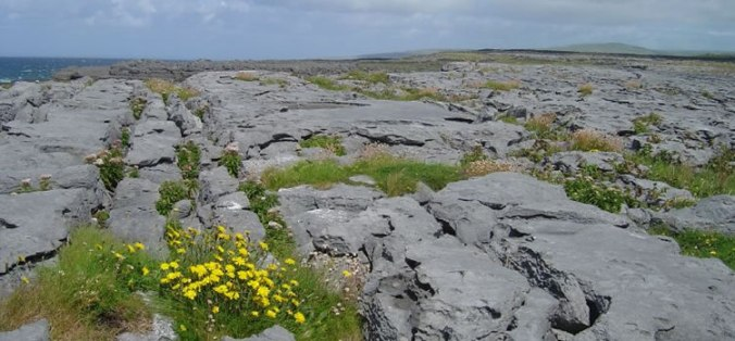 Plants and Flowers of the Burren - A Different Visit to Ireland Photo by Dusi BBG