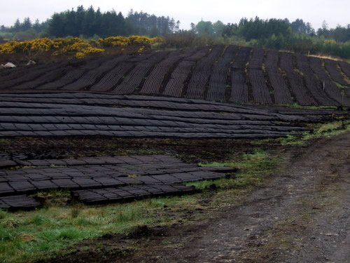 Newly cut turf at Coillonaughton Lines of machine-cut turf laid on the drying grounds of the bog near Coillonaughton Photo by Pamela Norrington