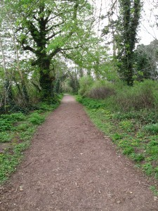 Path to Swiss Cottage, Cahir, Ireland