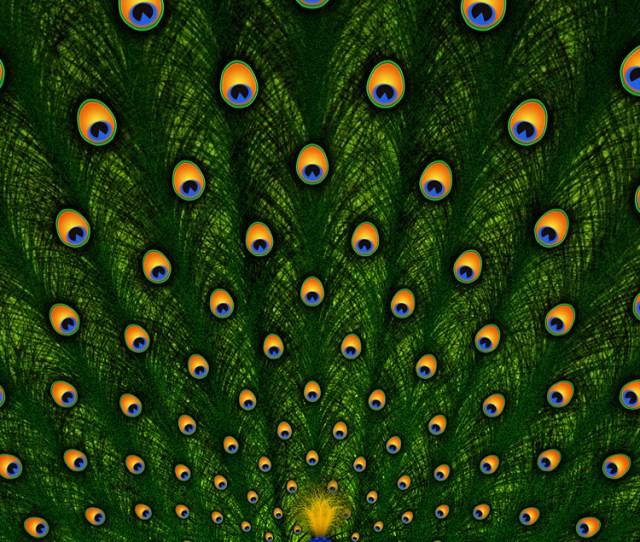 Peacock Beautiful Iphone  Wallpaper
