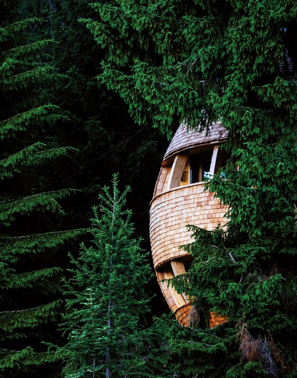 claudio beltrames eggshaped treehouse offers panoramic