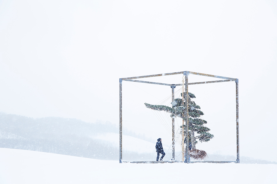 suspended+above+the+surface+of+the+snow%2C+the+tree%27s+colossal+root+formations+become+visible+as+they+hover+just+above+the+earth+from+which+they+came.