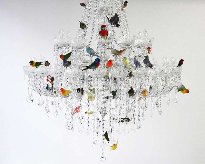 sebastian errazuriz perches taxidermied birds on a chandelier