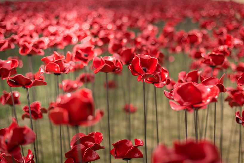 888,246 ceramic poppies tower of london for remembrance day