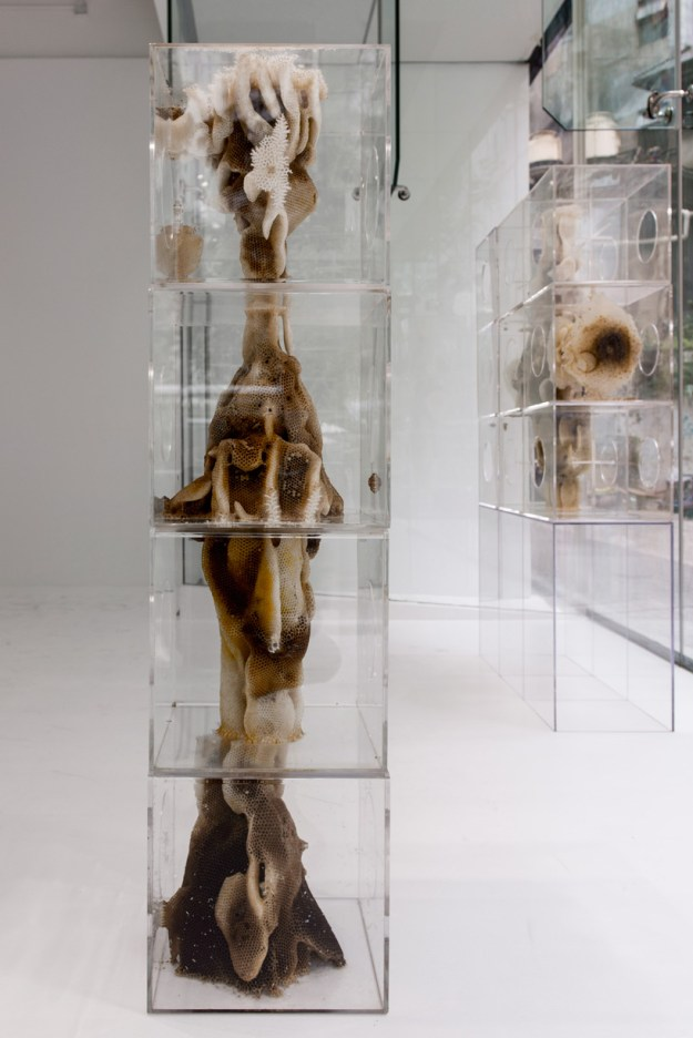 ren ri beeswax sculptures pearl lam galleries designboom