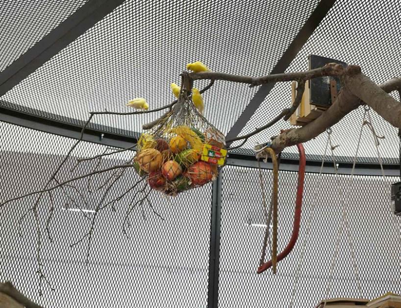 mark-dion-library-for-birds-new-york-tanya-bonakdar-gallery-designboom-02