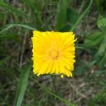 square flowers leafs baku maeda designboom