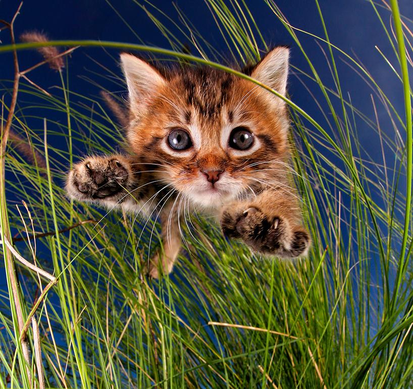 seth-casteel-pounce-kittens-designboom-02