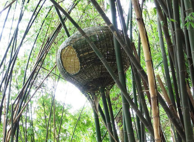 bentu builds free-standing bamboo nests onto living branches in