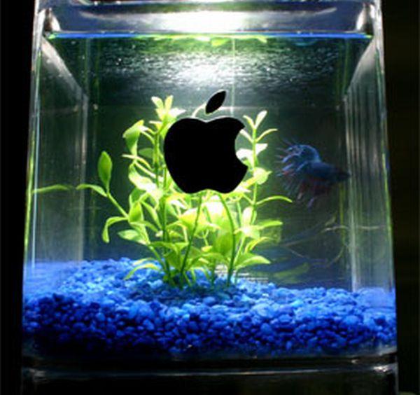 Mac G4 Cube Fish Tank Mod