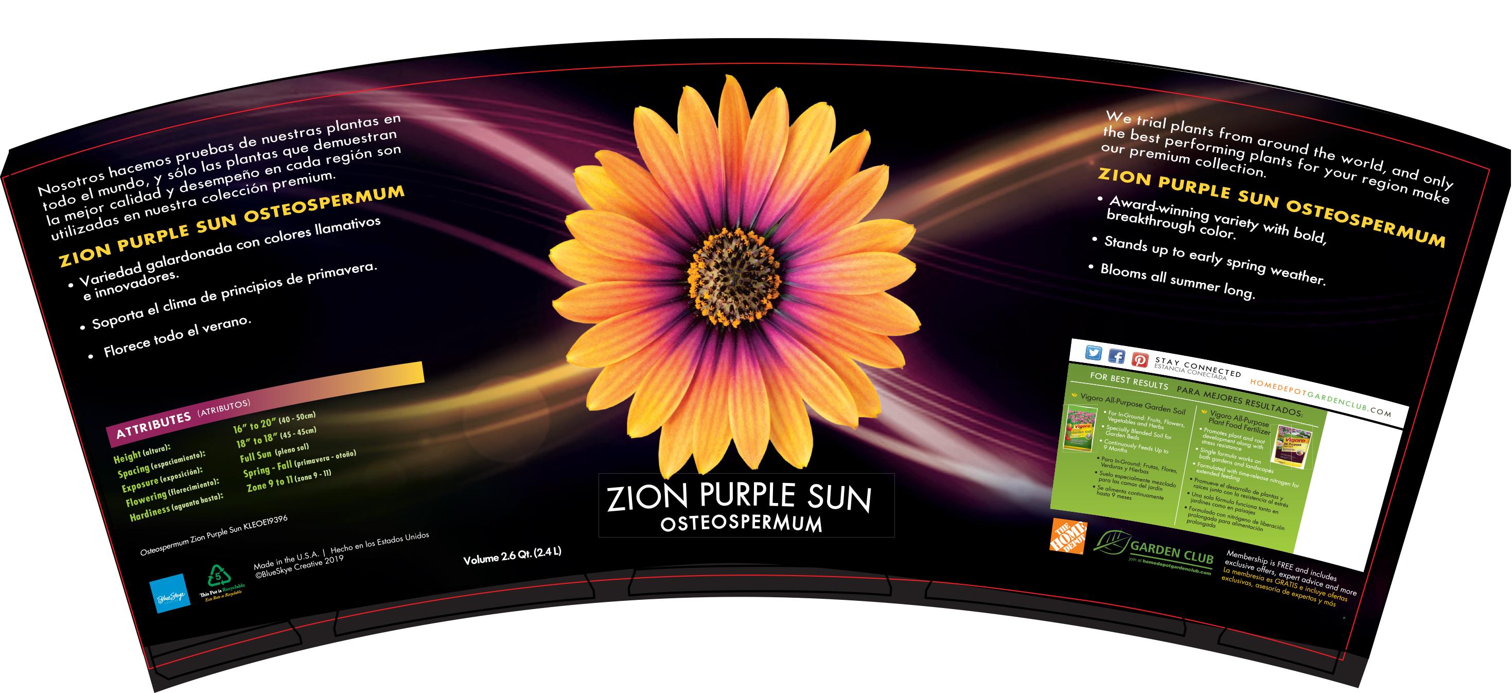 Osteospermum Zion Purple Sun