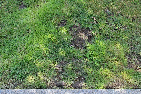 yard reveal week 6 of the yard transformation challenge #yardtranformations2018 before