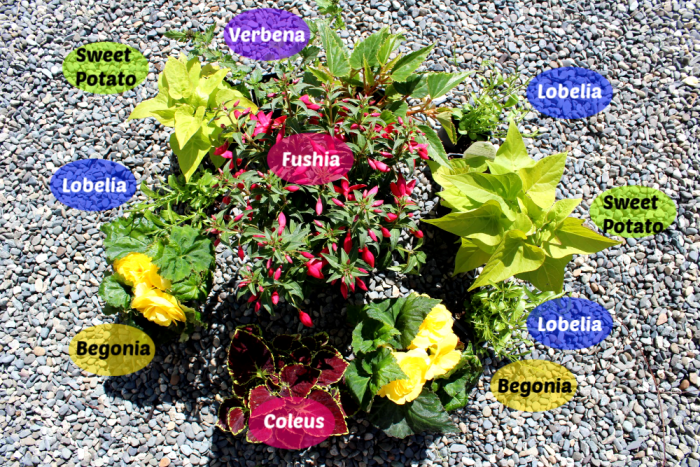 Do you want big showy cascading planters even though you have a shady spot to work with? You can have beautiful and colourful summer planters even in the shade! Let' make some shade planters