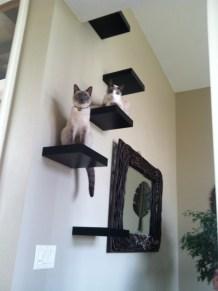 Prateleiras fazendo degraus para gatos