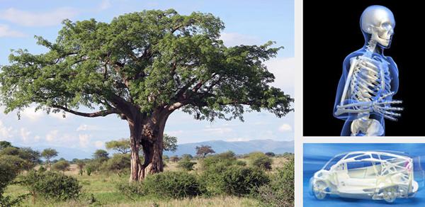 Observar árvores e sistemas ósseos nos permite maximizar a resistência de materiais.