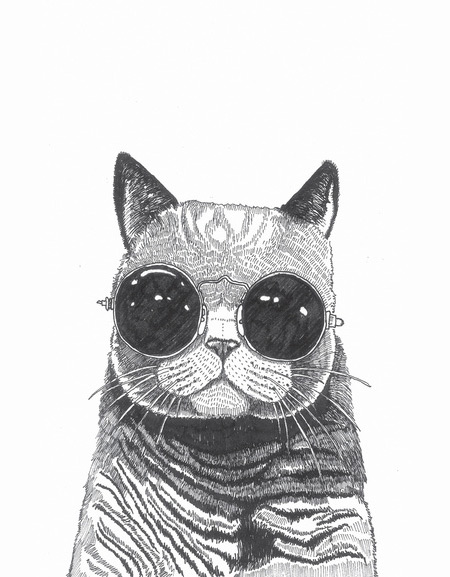 A Collection Of Cool Cat Illustrations