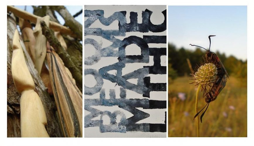 wood and bark, block printed text and an insect in a field. Images from Fay Jone's Anima exhibition at designermakers21