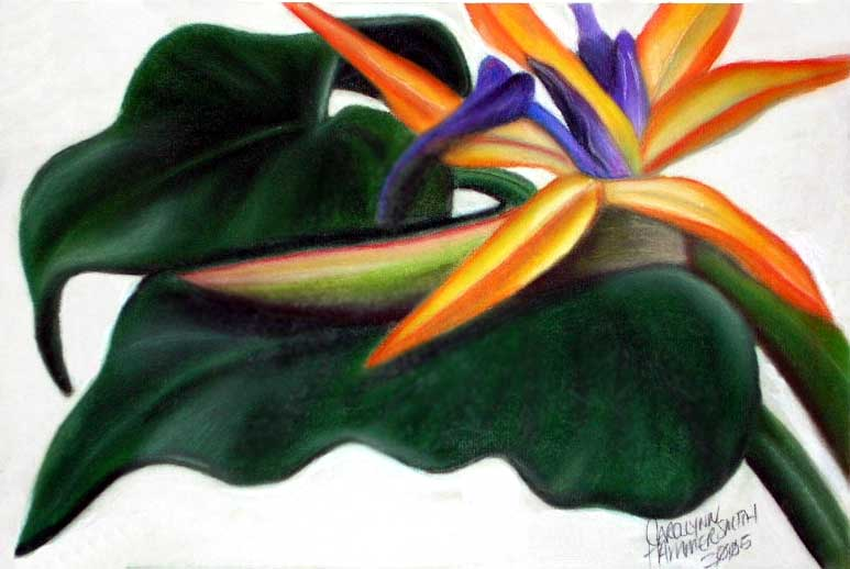 Bird of paradise flower between two elephant ears.  One of my first pastels