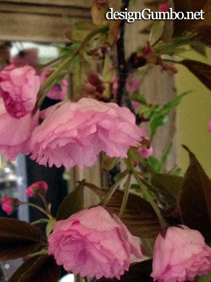 More Kwanzan Cherry Blossom Blooms