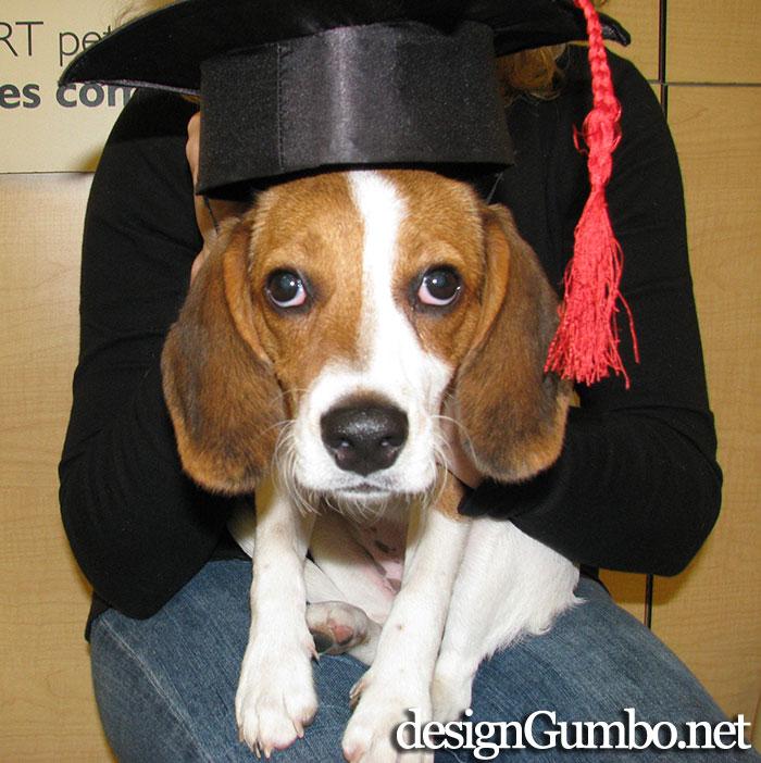 I am Beagle  and I graduamatated from puppy school!