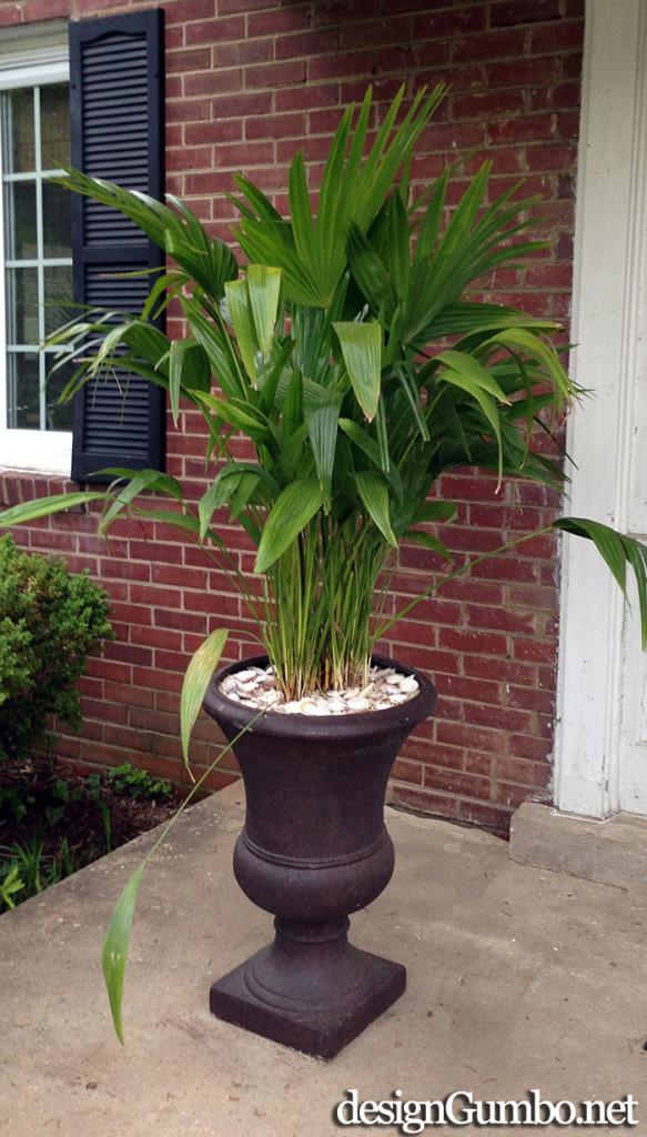 Porch Fantasies & Deck Dreams- Ubiquitous Potted Palm