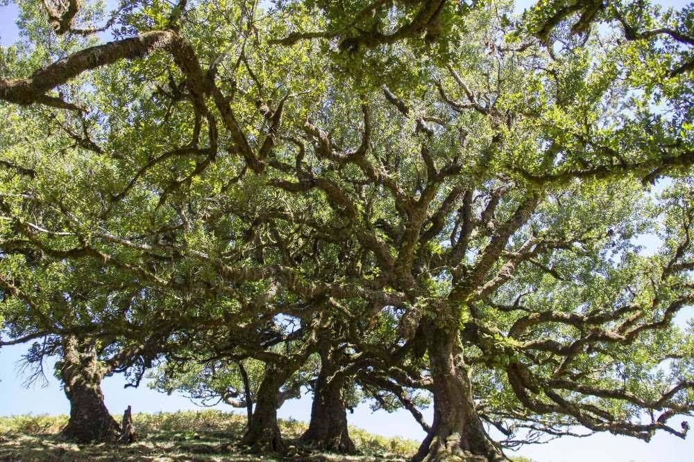 laurel-forest