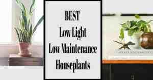 Best Low Light easy houseplants