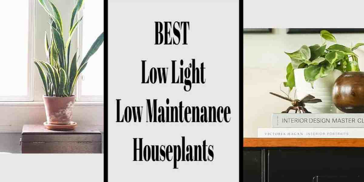 Low Light Low Maintenance House Plants