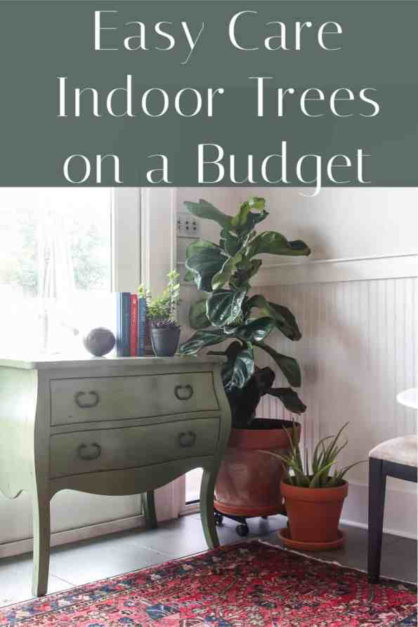 Do you see all the images of amazing rooms online with trees?  They can be pretty pricey, but there are affordable places to buy trees and there are some trees that are more suited to neglect.  Click to read which ones.