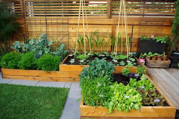 Raised Bed Vegetable Garden Design